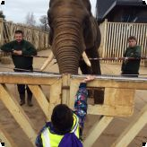 Year 1 pupils visit the Zoo...